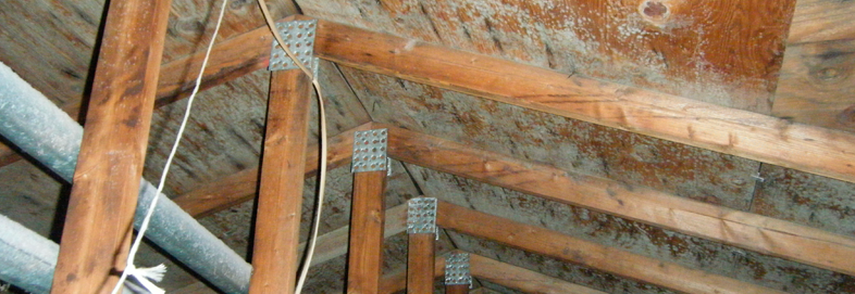 attic mold removal michigan metro detroit