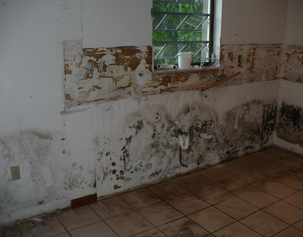 mold removal remediation treatment metro detroit